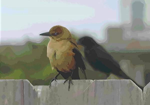 Molothrus Ater Photograph - Brown-headed Cowbird And Friend 2 by Cathy Lindsey