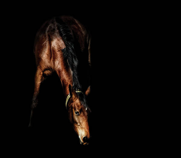Mare Photograph - Brown Horse In Shadow by Kerrick