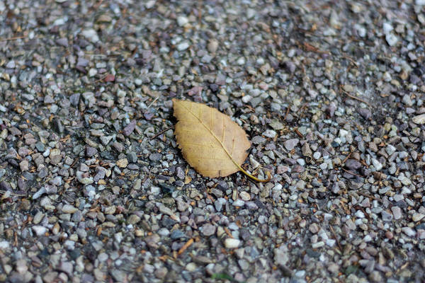 Photograph - Brown Leaf On Gravel by Scott Lyons