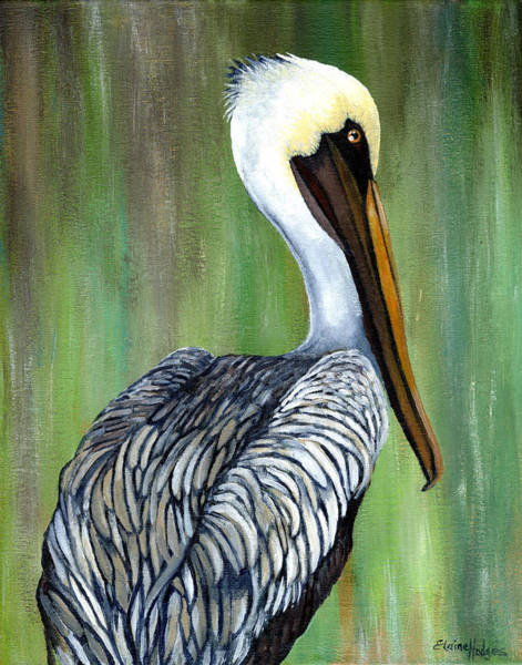 Wall Art - Painting - Brown Pelican 2 by Elaine Hodges