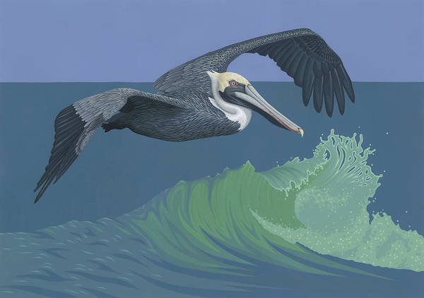 Wall Art - Painting - Brown Pelican by Nathan Marcy