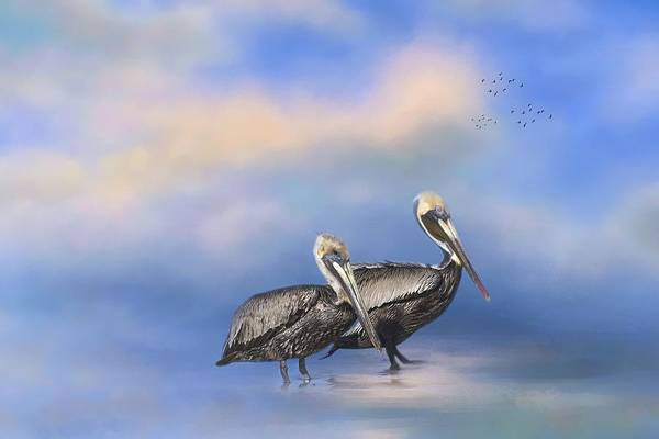 Photograph - Brown Pelicans At The Shore by Kim Hojnacki