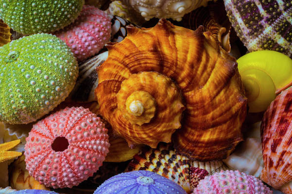 Wall Art - Photograph - Brown Sea Snail Shell And Urchins by Garry Gay