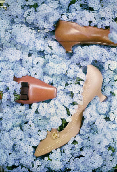 Wall Art - Photograph - Brown Shoes In Bed Of Blue Flowers by Gordon Parks