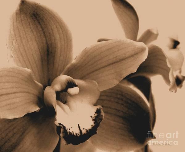 Wall Art - Photograph - Browntone Orchid Macro by Marsha Heiken