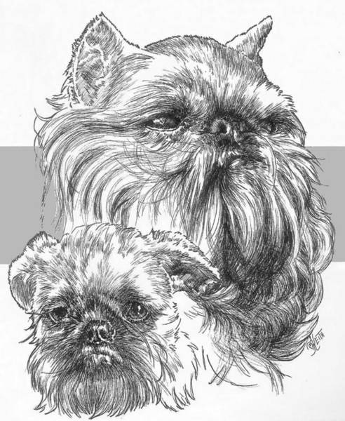Drawing - Brussels Griffon And Pup by Barbara Keith