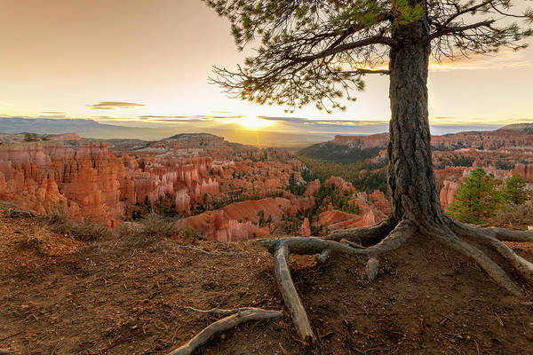 Wall Art - Photograph - Bryce Canyon National Park Sunrise 7 - Utah by Brian Harig
