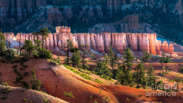 Wall Art - Photograph - Bryce Canyon by Oscity