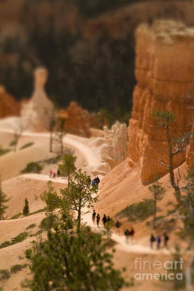 Wall Art - Photograph - Bryce Canyon Tilt-shift by Jenna Dosch