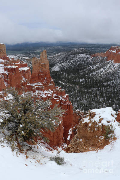 Wall Art - Photograph - Bryce Canyon Winter  by Christiane Schulze Art And Photography