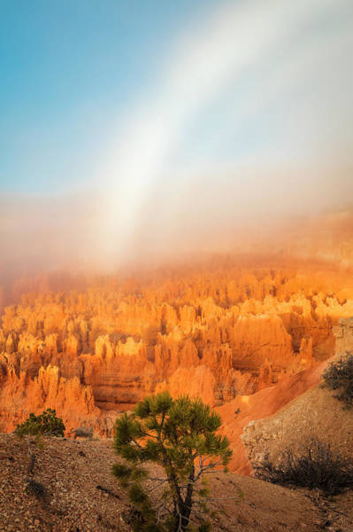 Wall Art - Photograph - Bryce Fogbow by Johnny Adolphson