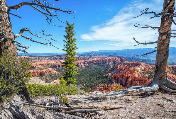 Photograph - Bryce Point Beauty by Joseph S Giacalone