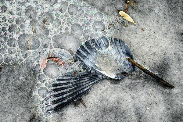 Photograph - Bubbles And Scallops by Cate Franklyn