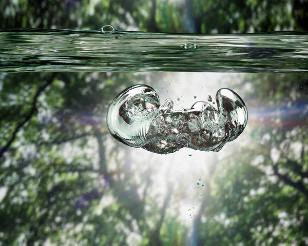 Underwater Photograph - Bubbles Underwater View, Trees In by Jonathan Knowles