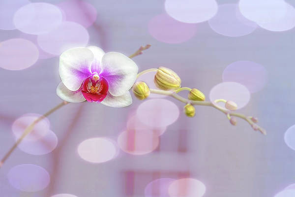 Photograph - Bubbly Orchid by Kay Brewer