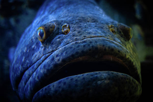 Photograph - Bucket Mouth by Jeff Phillippi