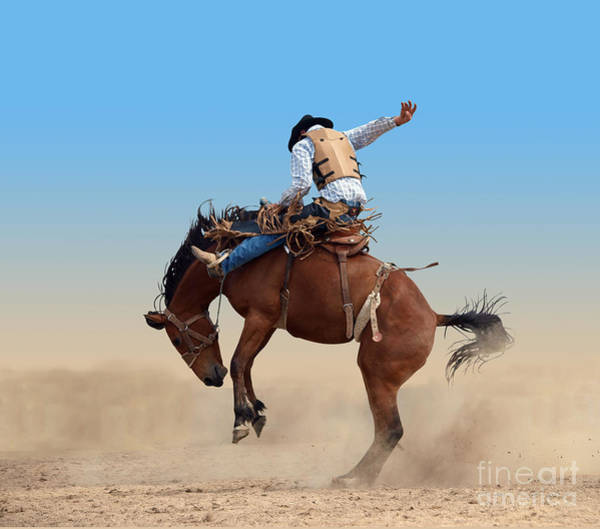 Arena Wall Art - Photograph - Bucking Rodeo Horse Isolated With by Margo Harrison
