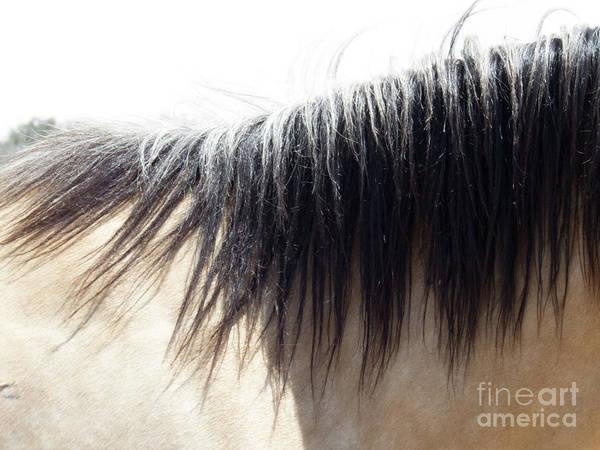 Photograph - Buckskin Horse 3 by Christy Garavetto