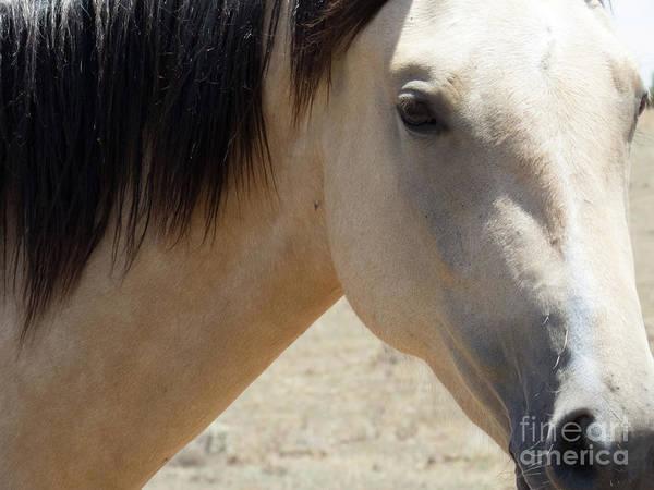 Photograph - Buckskin Horse 4 by Christy Garavetto