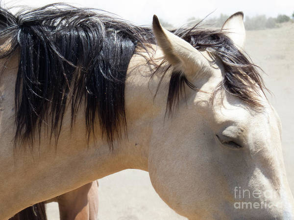 Photograph - Buckskin Horse 5 by Christy Garavetto