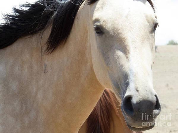 Photograph - Buckskin Horse 6 by Christy Garavetto