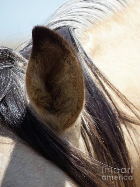 Photograph - Buckskin Horse Ear by Christy Garavetto