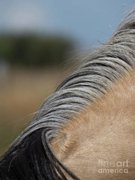 Photograph - Buckskin Mane Of Multi Colors by Christy Garavetto