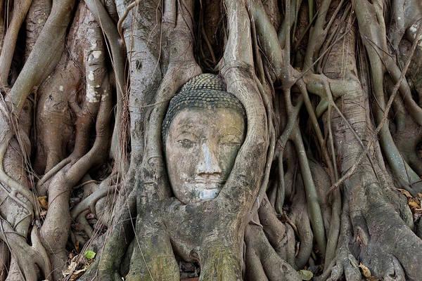 Thai Photograph - Buddha Head In Tree, Temple Wat by Peter Adams
