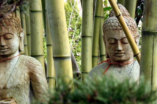 Hiding Photograph - Buddhas Silently Contemplating Bamboo by Catscandotcom