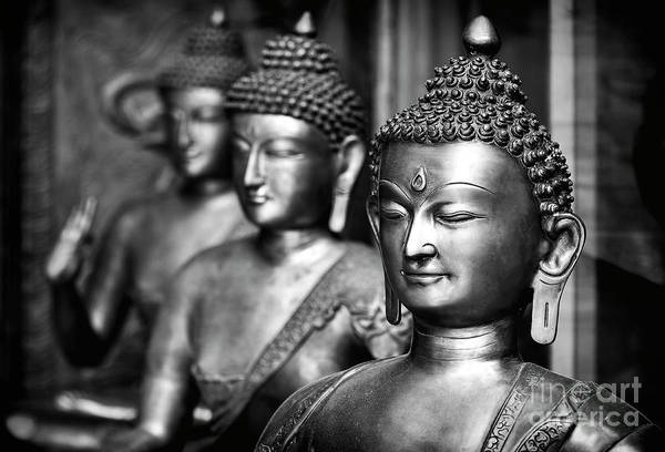 Photograph - Buddhas by Tim Gainey