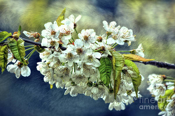 Photograph - Budding Blossoms by Vivian Martin