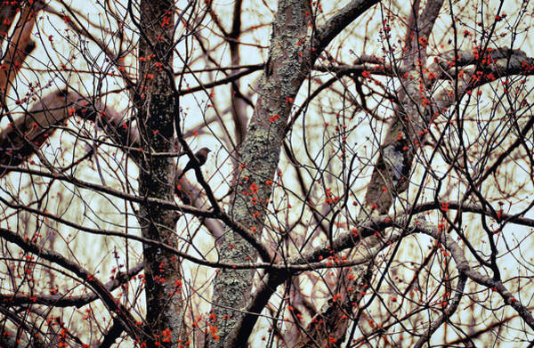 Photograph - Budding Spring Reds by JAMART Photography