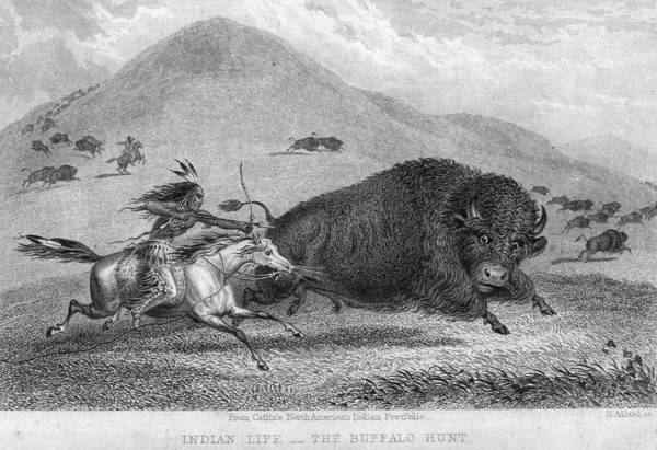 Indigenous Digital Art - Buffalo And Arrow by Hulton Archive