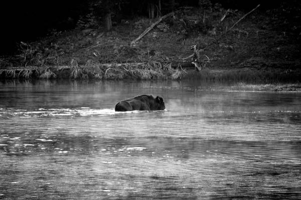 Photograph - Buffalo Crossing by Michael Monahan