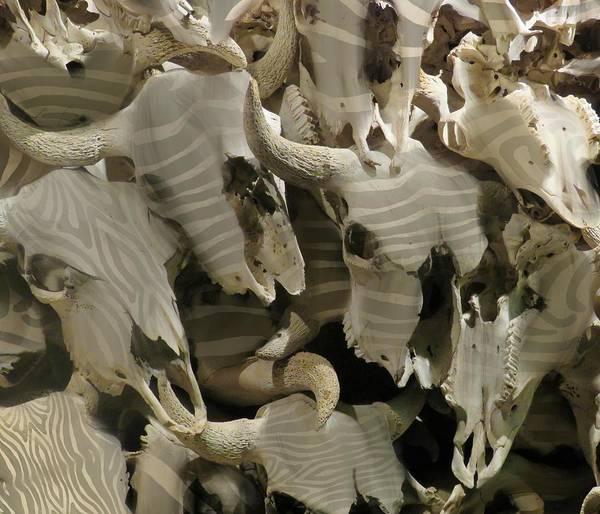Mixed Media - Buffalo Skulls Zebra Pattern 1 by Joan Stratton