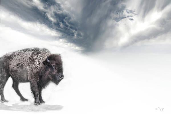 Photograph - Buffalo Winter by Evie Carrier