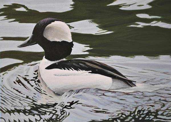 Painting - Bufflehead by Peter Mathios