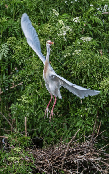 Photograph - Building A Nest by Jeffrey Klug
