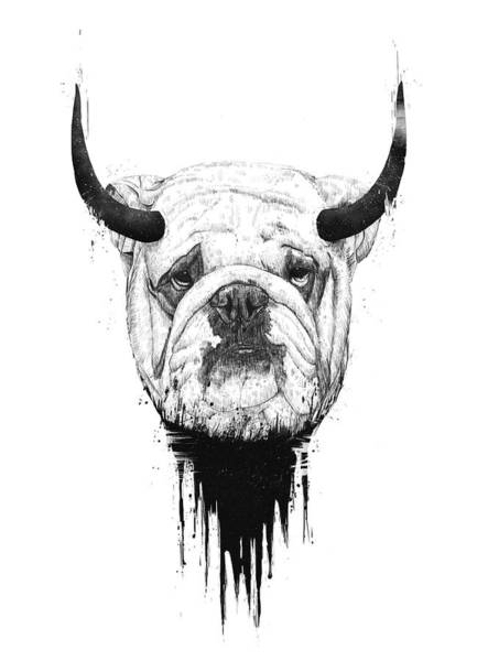 Wall Art - Drawing - Bull Dog by Balazs Solti