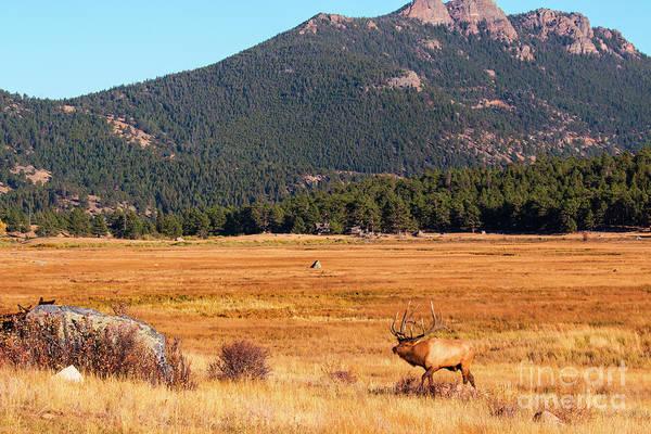 Photograph - Bull Elk In Mountain Meadow by Steve Krull
