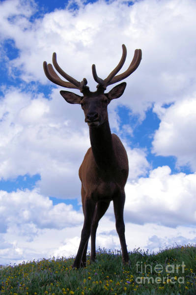 Wall Art - Photograph - Bull Elk Up Close by Jeff Swan
