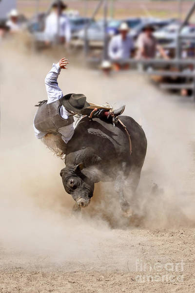 Rodeo Photograph - Bull Riding by Delphimages Photo Creations