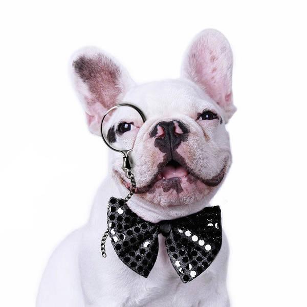 French Bulldog Photograph - Bulldog by Maika 777