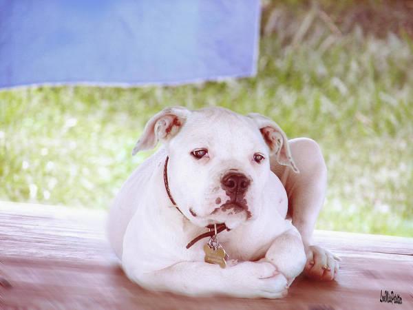Wall Art - Digital Art - Bulldog Rana Art 80 by Miss Pet Sitter