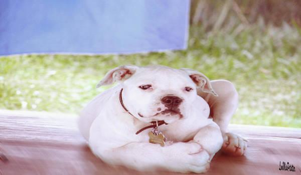 Digital Art - Bulldog Rana Art 82 by Miss Pet Sitter