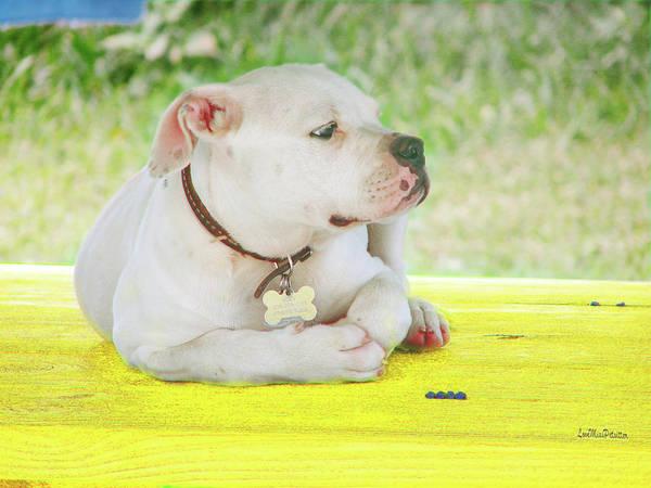 Digital Art - Bulldog Rana Art 86 by Miss Pet Sitter