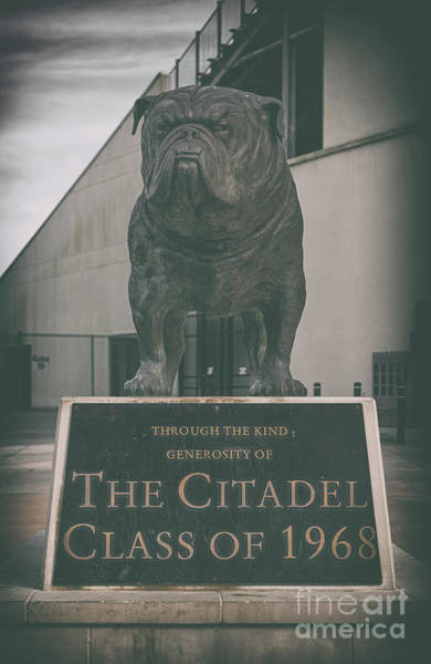 Photograph - Bulldog Tough - Citadel by Dale Powell
