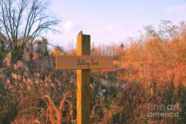 Photograph - Bullfrog Pond by Robyn King