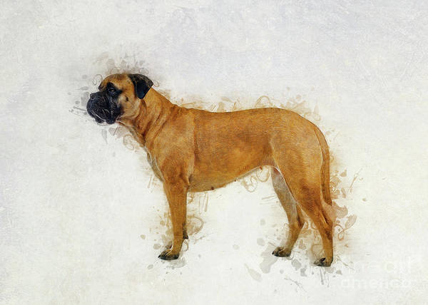 Digital Art - Bullmastiff by Ian Mitchell