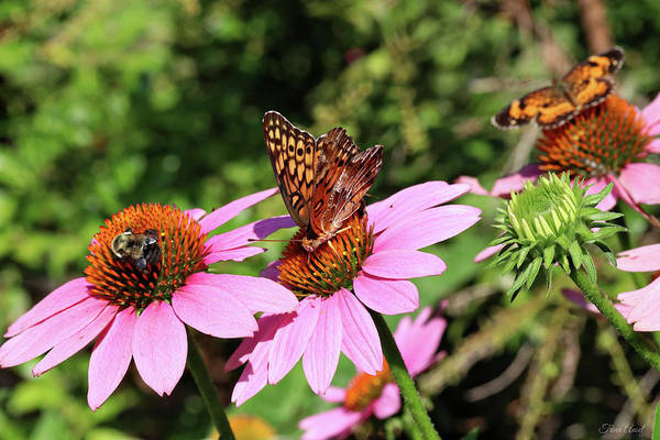 Photograph - Bumble Bee And Butterflies by Trina Ansel